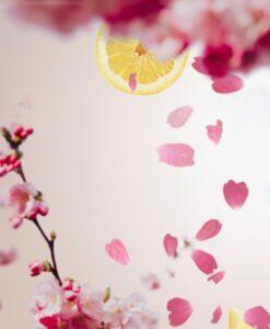 cherry blossom maison lampe berger navulling huisparfum
