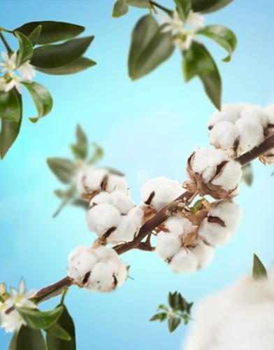 cotton caress maison lampe berger