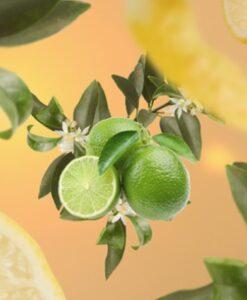lemon flower maison lampe berger